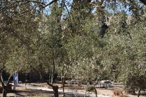 29 octobre Jardin de Gethsemani (8)