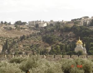 mont des oliviers depuis la mosquée d'IOmar